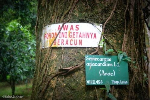 Pohon Kebun Raya Bogor