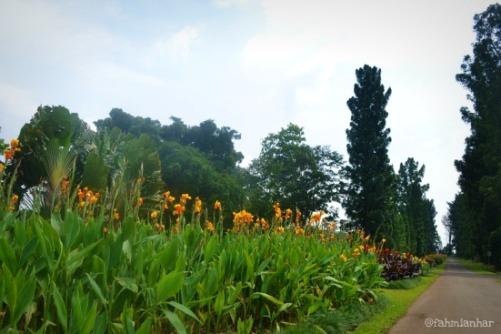Taman Bunga Kebun Raya Bogor