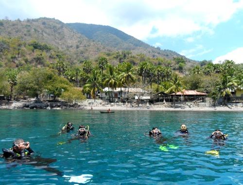 Coconut Groove - Pulau Pura Alor