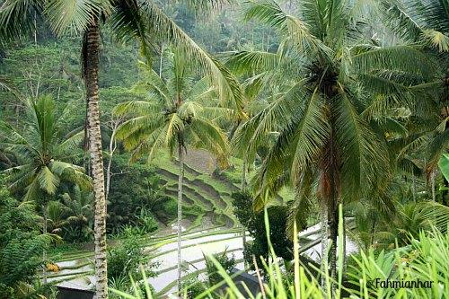 Sawah Subak di sekitar Pura Candi Gunung Kawi Bali