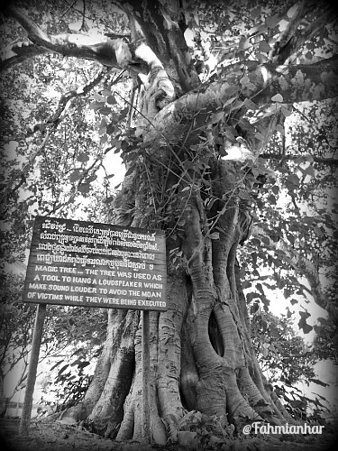 Magic Tree Choeung Ek Killing Fields Cambodia