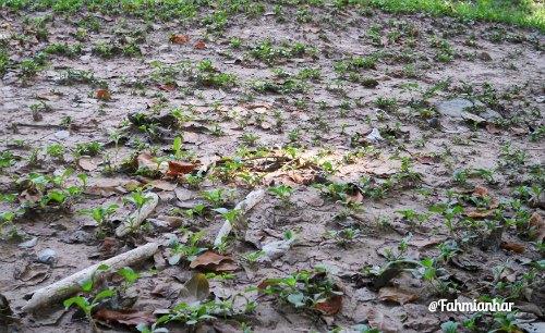 Sisa Tulang di Choeung Ek Killing Fields