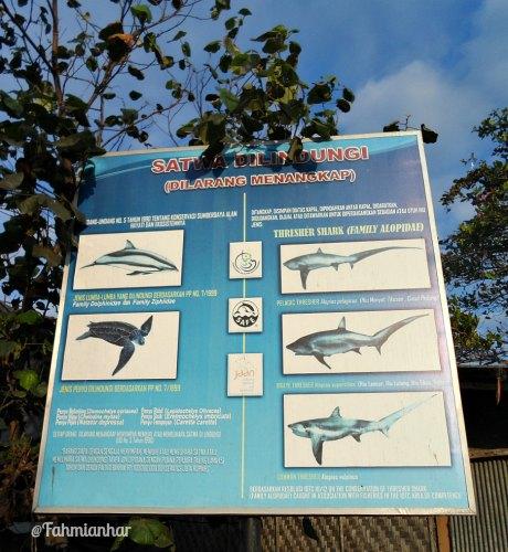 Satwa Dilindungi Pantai Kusamba Bali #savesharks